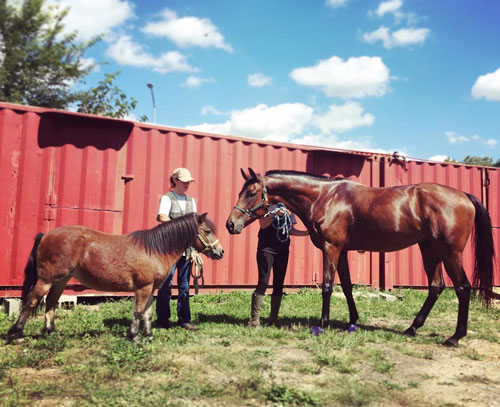 Fresh NYC Horse Ownership: The Rent's Not Cheap VD26