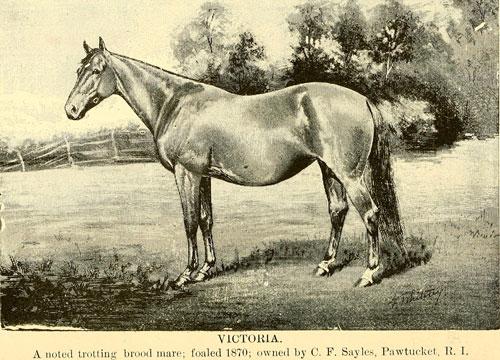 Horse theft