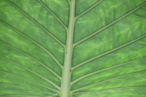 0115_chlorophyll